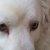 Christa Reinhold, Hundetrainerin @ Hundeschule Petershagen