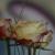 Marina Fischer, keine Angabe @ mf-art, Cham